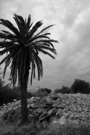 demolished house: Palm tree and pile of rubble. Demolished house ruins black and white.