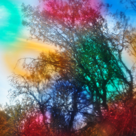 trippy: Glowing forest tree branches blur through colorful glass. Abstract landscape beauty in nature.