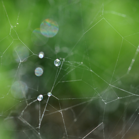 Spider web and rain drops macro. Abstract nature background. photo