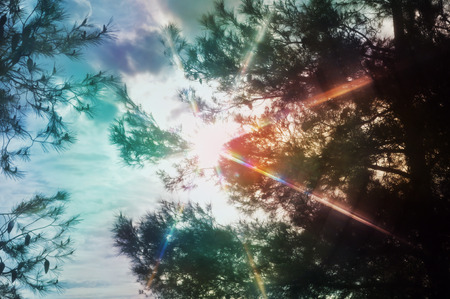 Sun rays lens flare light spectrum through pine trees. Abstract spring nature colorful motion blur. Stock Photo