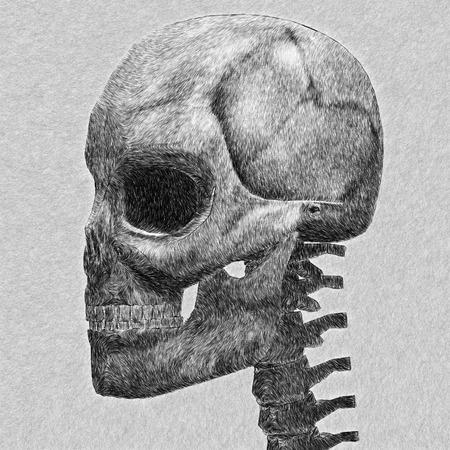 Human skull sketch. Abstract digitally created illustration. Stock Illustration - 26627853