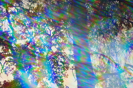 prisma: Los colores del espectro Los rayos de luz y ramas de los árboles en un día soleado bosque reflexiones abstractas a través del filtro del prisma de la vendimia Foto de archivo