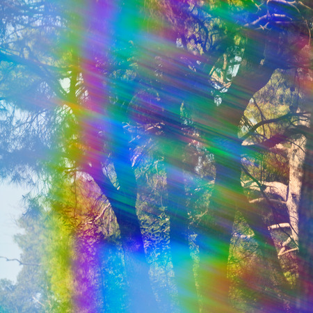 Spectrum colors light leak and faded trees abstract forest reflections through vintage prism filter