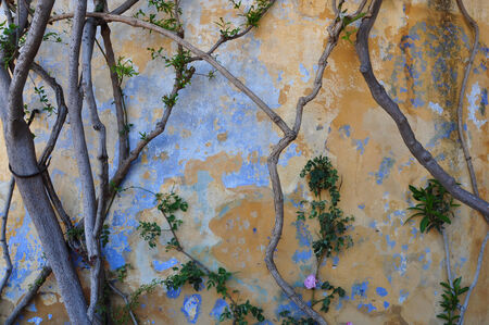 Old textured wall and tree branches abstract background. photo