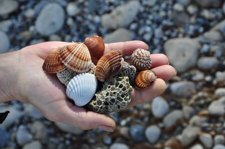 beachcombing: Hand holding sea shells and pumice stones found washed on rocky beach. Stock Photo