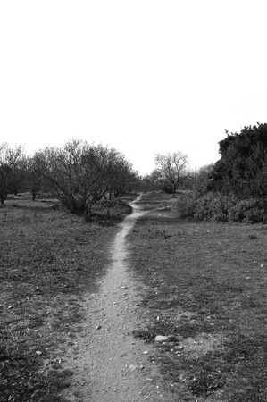 dirtroad: Crooked trail footpath through park. Black and white.
