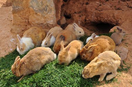 burrow: Rabbits feeding on grass and rabbit hole. Farm animals. Stock Photo