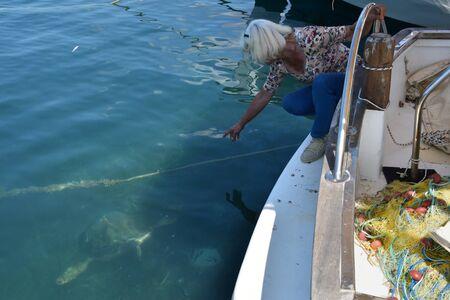 animal species: ZAKYNTHOS, GREECE - JULY 5, 2015: Woman points to a caretta-caretta loggerhead sea turtle feeding below the fishing boats at Limni Keri beach in Zakynthos. Endangered animal species.