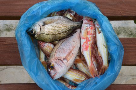 catch of fish: Fresh red mullet and bream mediterranean fish in plastic bag. Stock Photo