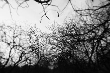 Hazy winter tree branches center spot blur. Black and white.
