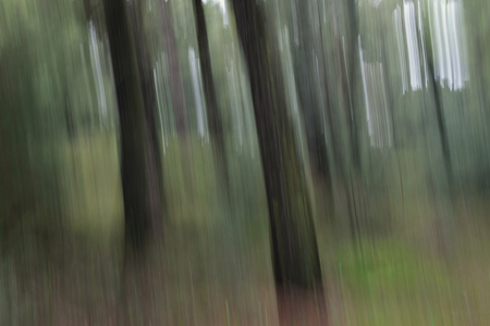 Tree trunks and light rays motion blur. Abstract forest landscape.
