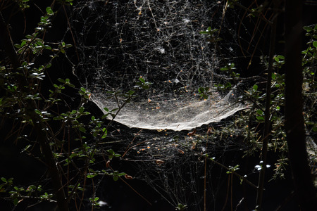Spider and web on tree branches in gloomy forest. Archivio Fotografico