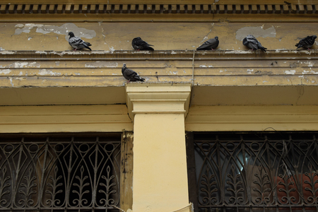 Pigeons on ledge of weathered neoclassical building and ornamental iron pattern windows.