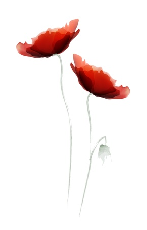 pfingstrosen: Red Poppy Illustration