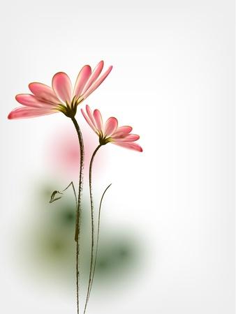 Spring flower background Daisy
