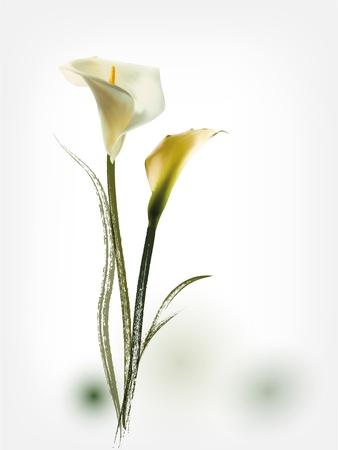oldened: Spring flower background Illustration