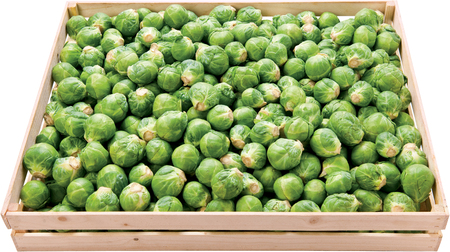 Brussels sprout in a box raw vegetable