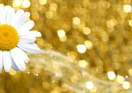 color background gold and daisy  photo