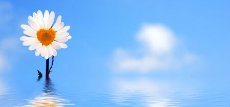 Daisy flower shaped heart at bottom of sky and water photo