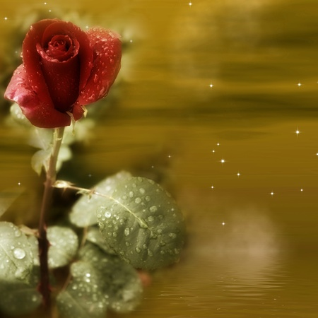 Red Rose romance in golden background photo