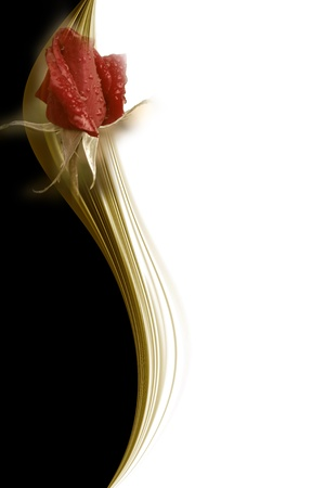 Elegant red rose flower white black and gold card Stock Photo