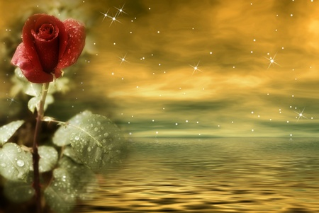 Postcard of love, night gold with red rose flower photo