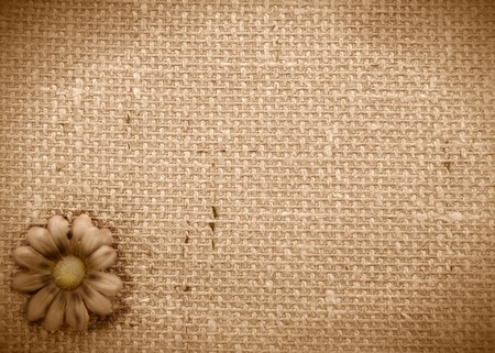 sepia background burlap and Daisy  Stock Photo