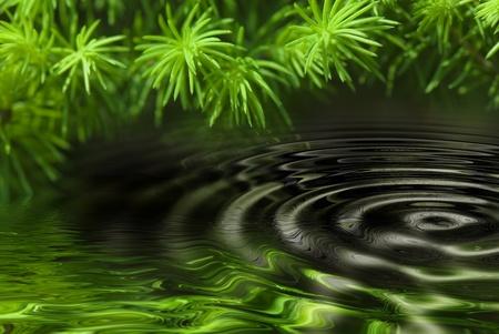circulos concentricos: hojas verdes que se refleja en el agua