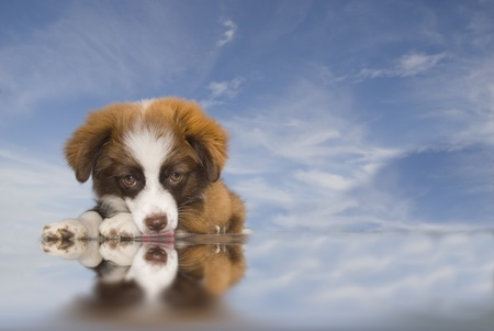 puppy lying on blue sky background water lapping photo
