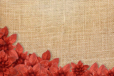 Christmas background, poinsettias under burlap on canvas photo