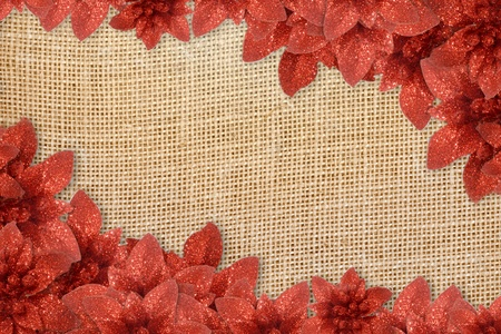 Christmas poinsettias background over sacking Stock Photo
