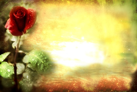 grunge background, natural red rose, copy space Stock Photo