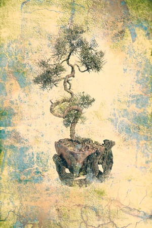 juniper bonsai in old parchment texture photo