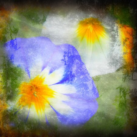 textured grunge background with two bellflowers photo