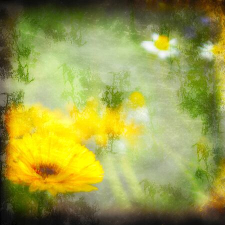 textured grunge background daisy with copy space photo