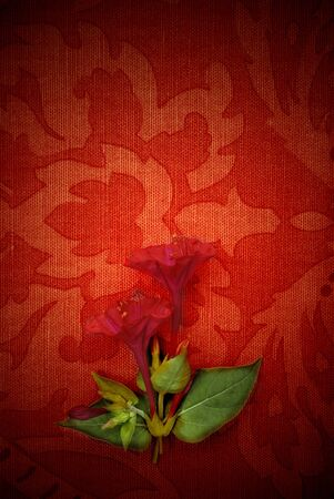 Flower background, passion red fabric photo