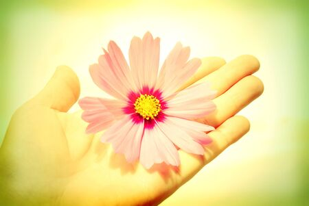 I offer my friendship, hand extended with a flower photo