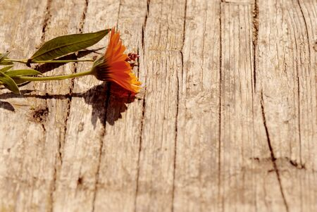 Romantic card flower on old wood floor photo