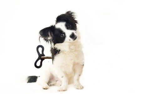 abandoned puppy, dog toy concept, isolated on white photo