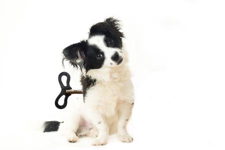 abandoned puppy, dog toy concept, isolated on white Stock Photo - 18028449