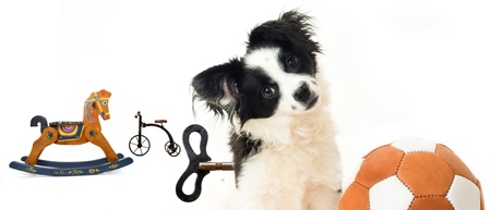 not to abandoned dogs, photo concept, puppy and toys photo
