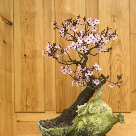 flowering in plants: plum blossom bonsai potted handmade