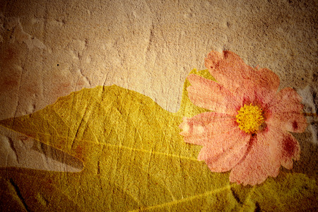 fig leaf: Beautiful grunge background with fig leaf and pink daisy