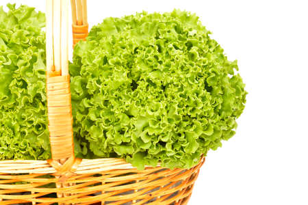 Lettuce organic farming in wicker basket isolated on white background photo
