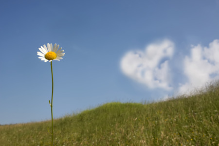 Romantic card daisy field and blue sky with heart shaped cloud photo