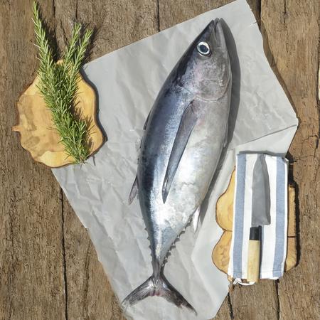 Albacore tuna fish recently, rustic still life photo