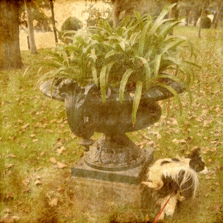 urination: Dog peeing in a flowerpot park, lomo style photo