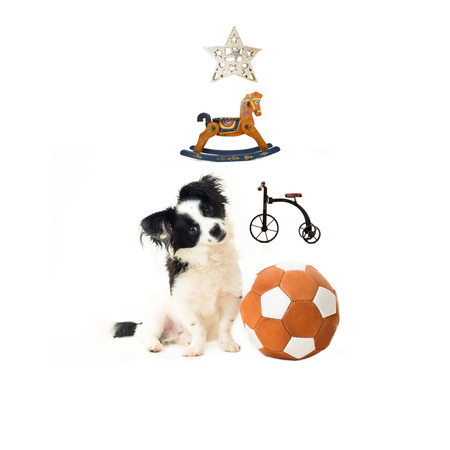 Adopt a puppy for Christmas, puppy and toys  forming a Christmas tree isolated on white background photo
