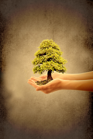 Caring for the earth, hands holding a tree photo