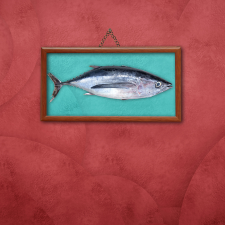 thunnus: Albacore, picture hanging on a wall with space for text Stock Photo